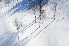 Invierno Nevado Fotos de archivo
