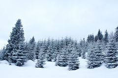 Invierno Nevado Imagen de archivo