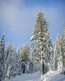 Invierno nevado del bosque Fotografía de archivo