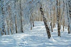 Invierno Nevado en bosque Fotografía de archivo