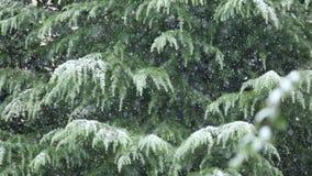 Invierno Nevado, nieve que cae sobre los árboles metrajes