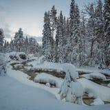 Invierno nevoso mismo en Noruega del norte Río del bosque en las montañas Geitfjellet cerca de Heia, área de Grong foto de archivo