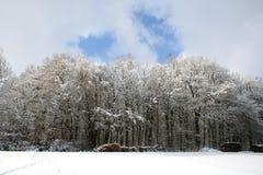 Invierno-Paisaje fotografía de archivo libre de regalías