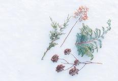 Invierno - plantas congeladas en fondo natural de la nieve Imagenes de archivo