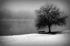 Invierno por el río Fotografía de archivo