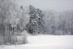 Invierno por las maderas Fotos de archivo libres de regalías
