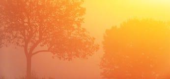 Invierno por salida del sol, el rayo de sol de oro hermoso que brilla en árboles de los pares y los campos tropicales, forma del  imagenes de archivo