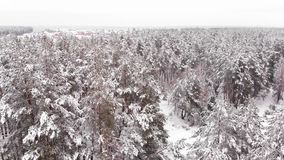 Invierno profundo en el Forrest - vuelo aéreo almacen de video