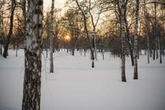 Invierno Puesta del sol nieve abedules Foto de archivo libre de regalías