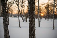Invierno Puesta del sol nieve abedules Fotos de archivo libres de regalías