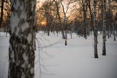 Invierno Puesta del sol nieve abedules Imagenes de archivo