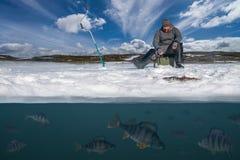 Invierno que pesca concepto Pescador en la acción Perca de cogida f imagen de archivo