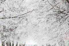 Invierno, ramas en escarcha Imagen de archivo