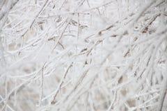Invierno, ramas en escarcha Imagen de archivo libre de regalías