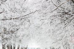 Invierno, ramas en escarcha Foto de archivo