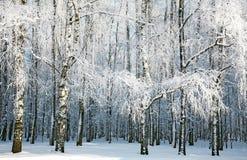 Invierno ruso Foto de archivo libre de regalías