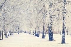 Invierno ruso Ski Track en un bosque del abedul Fotos de archivo libres de regalías