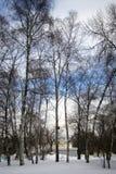 Invierno ruso Vista del parque de VDNKH en Moscú, callejón de árboles La tierra es cubierta por la nieve Fotos de archivo