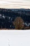 Invierno Sauerland Imagen de archivo