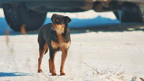 Invierno sin hogar del perro frío problema sin hogar de los animales domésticos de los animales forma de vida marrón del perro en metrajes
