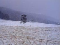 Invierno solitario de la nieve del campo del árbol Imagen de archivo libre de regalías