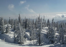 Invierno spruce de la montaña Fotografía de archivo libre de regalías