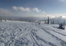 Invierno spruce de la montaña Imagenes de archivo