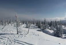 Invierno spruce de la montaña Fotos de archivo