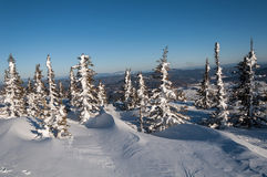 Invierno spruce de la montaña Foto de archivo