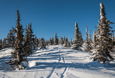 Invierno spruce de la montaña Foto de archivo libre de regalías
