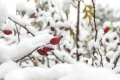 Invierno temprano Fotos de archivo