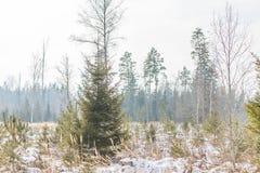 Invierno temprano, mañana brumosa fría Imagen de archivo