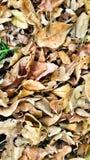 Invierno triste de las hojas Foto de archivo libre de regalías