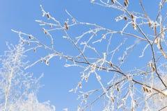 Invierno y cielo frío, azul y ramas de árbol en el galán de la helada A Fotos de archivo libres de regalías