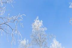 Invierno y cielo frío, azul y ramas de árbol en el galán de la helada A Imagen de archivo libre de regalías