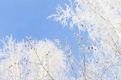 Invierno y cielo frío, azul y ramas de árbol en el galán de la helada A Fotografía de archivo libre de regalías