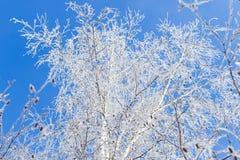 Invierno y cielo frío, azul y ramas de árbol en el galán de la helada A Foto de archivo