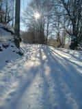 Invierno y nieve Fotografía de archivo libre de regalías