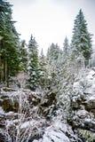 Invierno y paisaje de la nieve en el soporte Rainier National Park, paraíso Imágenes de archivo libres de regalías