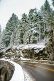 Invierno y paisaje de la nieve en el soporte Rainier National Park, paraíso Imagenes de archivo