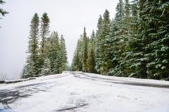 Invierno y paisaje de la nieve en el soporte Rainier National Park, paraíso Imagen de archivo libre de regalías