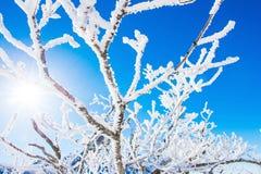 Invierno y soleado en deogyusan, Corea imagen de archivo libre de regalías