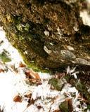 Invierno y tiro macro de clasificación Fotos de archivo libres de regalías