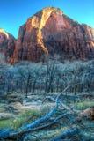 Invierno Zion Mountain, enmarcado por las ramas Fotos de archivo libres de regalías