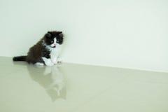 Invio adorabile del gattino Fotografie Stock