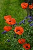 Invitación anaranjada Fotografía de archivo libre de regalías