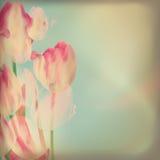 Invitación con los tulipanes abstractos. EPS 10 Imagenes de archivo