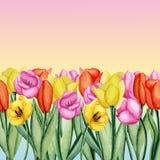 Invitación de los tulipanes Imagenes de archivo