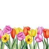 Invitación de los tulipanes Fotografía de archivo libre de regalías