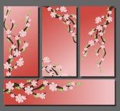 Invitación de Sakura del flor Imágenes de archivo libres de regalías